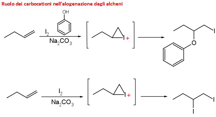 ruolo del carbocatione nell'alogenazione degli alcheni