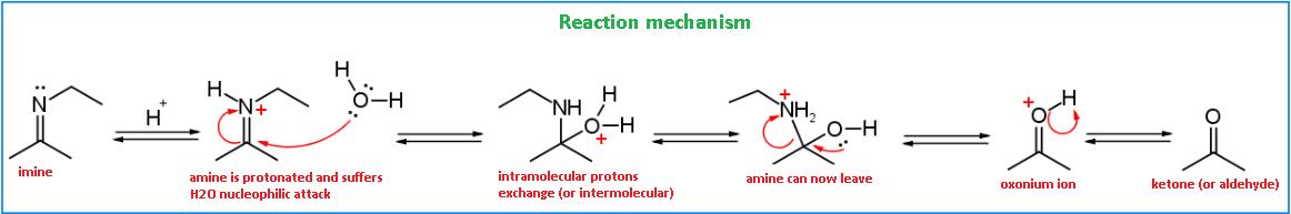 meccanismo-idrolisi-immina